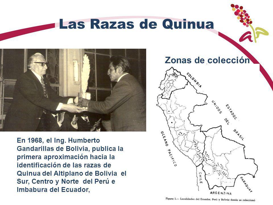 Las Razas de Quinua En 1968, el Ing. Humberto Gandarillas de Bolivia, publica la primera aproximación hacia la identificación de las razas de Quinua d