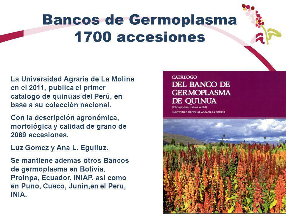 Bancos de Germoplasma 1700 accesiones La Universidad Agraria de La Molina en el 2011, publica el primer catalogo de quinuas del Perú, en base a su colección nacional.