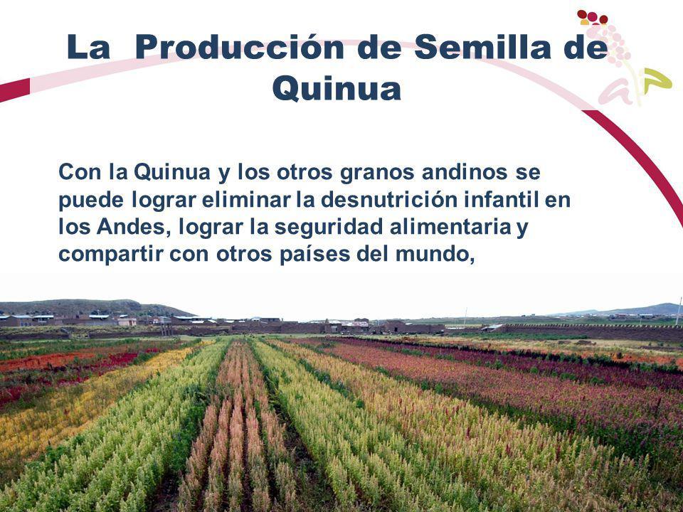 La Producción de Semilla de Quinua Con la Quinua y los otros granos andinos se puede lograr eliminar la desnutrición infantil en los Andes, lograr la seguridad alimentaria y compartir con otros países del mundo,