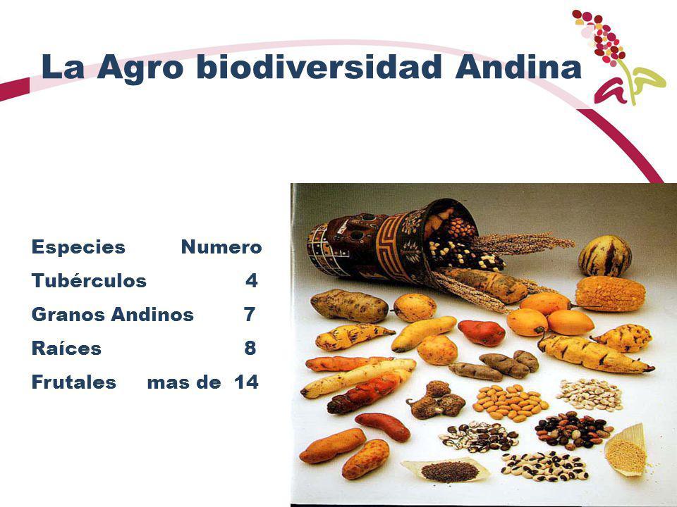La Agro biodiversidad Andina Especies Numero Tubérculos 4 Granos Andinos 7 Raíces 8 Frutales mas de 14