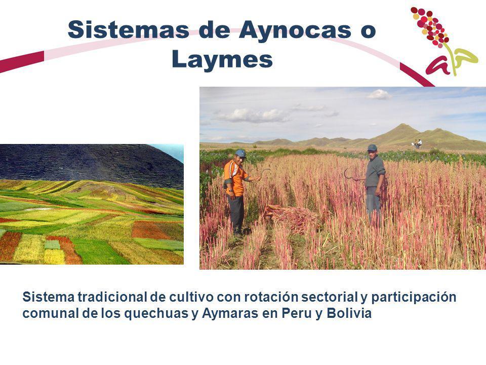 Sistemas de Aynocas o Laymes Sistema tradicional de cultivo con rotación sectorial y participación comunal de los quechuas y Aymaras en Peru y Bolivia