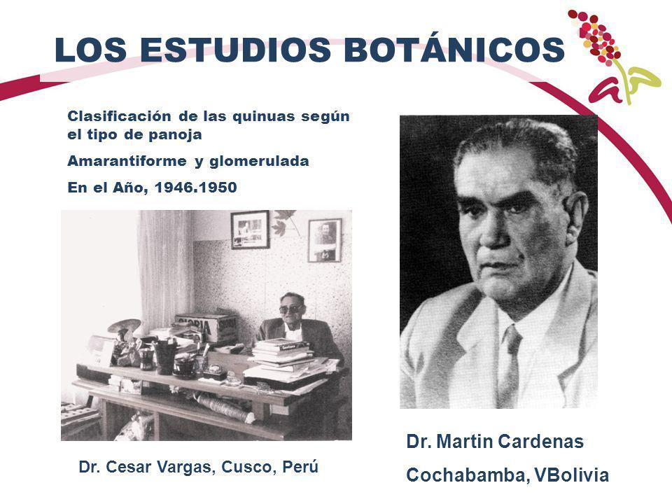 LOS ESTUDIOS BOTÁNICOS Clasificación de las quinuas según el tipo de panoja Amarantiforme y glomerulada En el Año, 1946.1950 Dr. Martin Cardenas Cocha