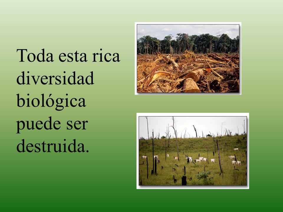 Los procesos ecológicos y evolutivos Los procesos responsables de generación de patrones de la biodiversidad son: Los procesos ecológicos son los procesos físicos (ciclo hidrológico de ríos) y actividades de plantas y animales (dispersión de semillas, migración de aves y peces) que influyen en salud de ecosistemas y contribuyen al mantenimiento de su diversidad, integridad genética, y el mantenimiento de su potencial evolutivo.