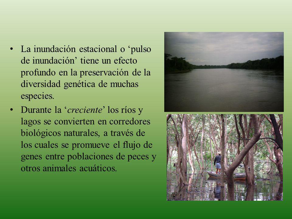 Destruccion y fragmentacion del habitat Destruccion de la capacidad de almacenamiento de agua Destruccion de la diversidad biologica Destruccion de las fuentes alimenticias tradicionales para los pueblos indigenas