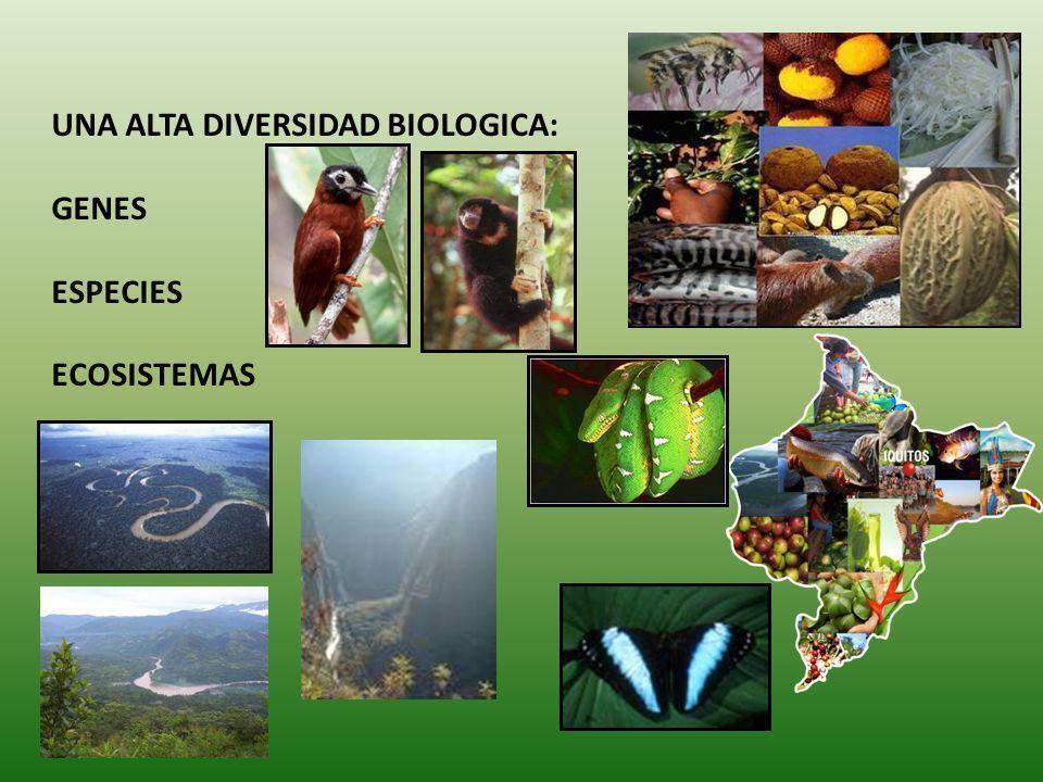 Los bosques y los ríos desarrollan un singular vínculo en las grandes llanuras inundables de la Amazonía, en el cual los bosques proporcionan condiciones apropiadas para el almacenamiento de agua y el mantenimiento del ciclo del agua, y el agua es la vía a través de las cuales viajan las semillas, y sus consumidores/dispersores, para colonizar otras áreas.