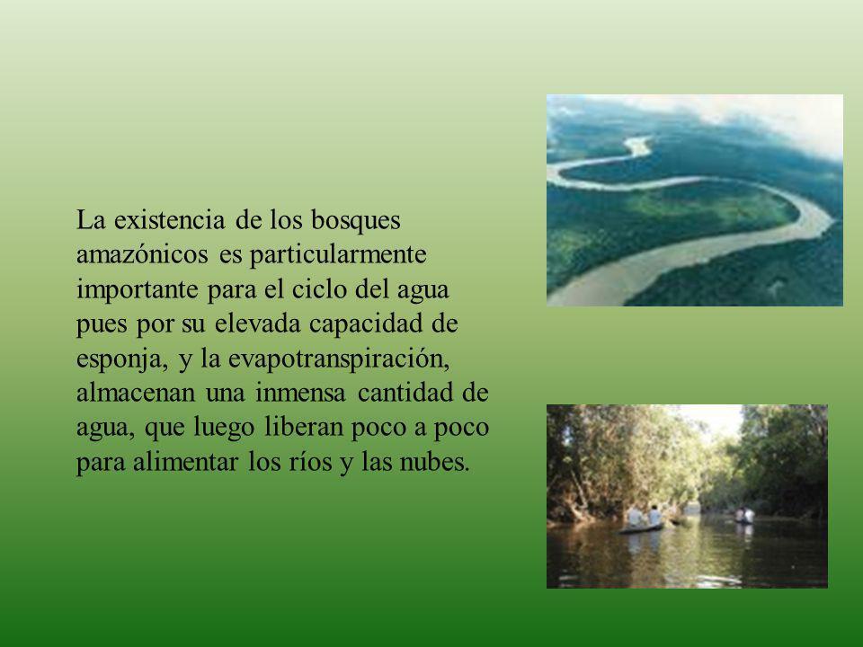 Las cabeceras de cuenca de la amazonía son parte de los corredores biológicos, de una alta complejidad florística y estructural, contienen un amplio número de especies endémicas y amenazadas, y albergan una rica diversidad faunística.