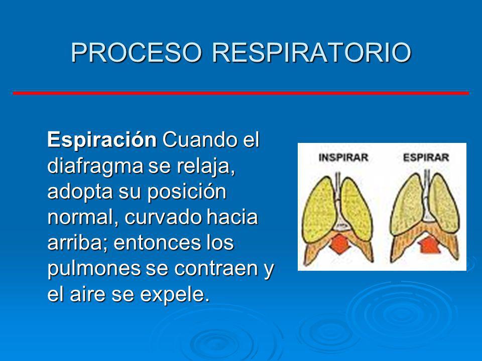 PROCESO RESPIRATORIO Espiración Cuando el diafragma se relaja, adopta su posición normal, curvado hacia arriba; entonces los pulmones se contraen y el