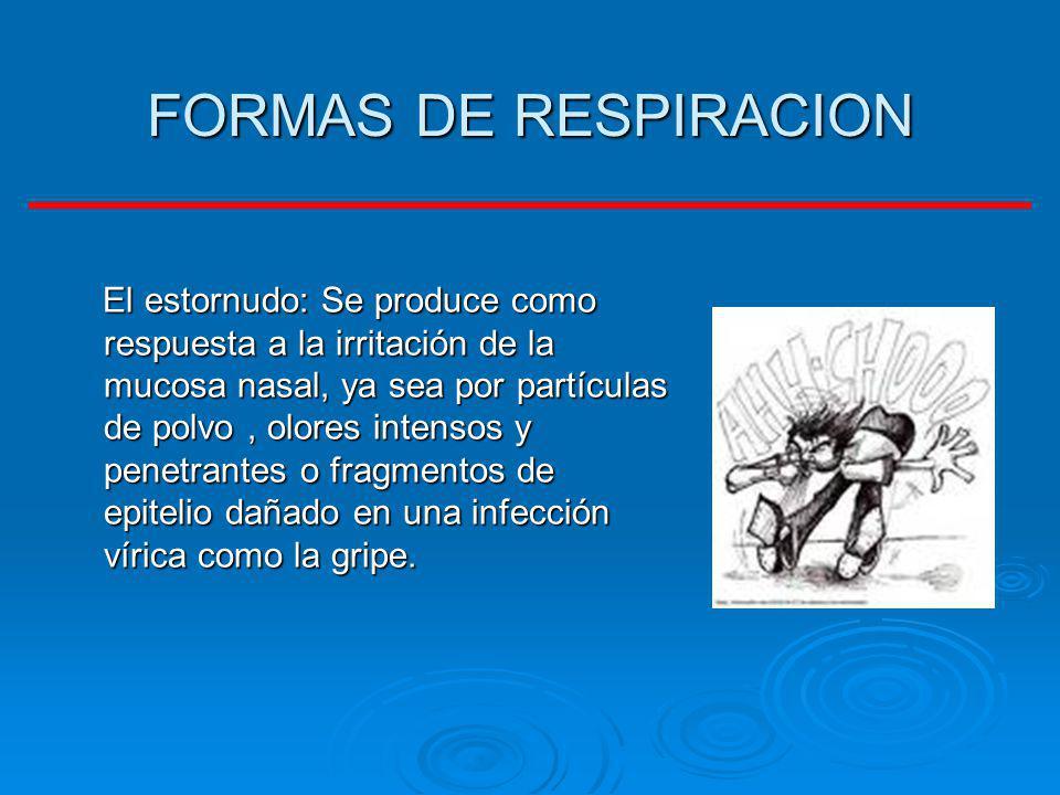 FORMAS DE RESPIRACION El estornudo: Se produce como respuesta a la irritación de la mucosa nasal, ya sea por partículas de polvo, olores intensos y pe