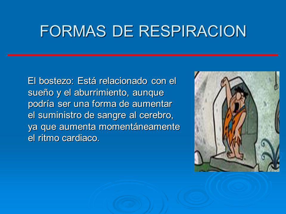 FORMAS DE RESPIRACION El bostezo: Está relacionado con el sueño y el aburrimiento, aunque podría ser una forma de aumentar el suministro de sangre al
