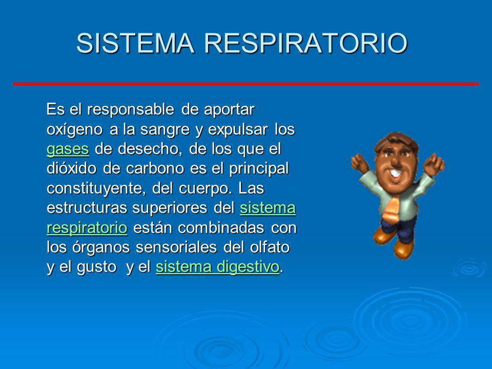 SISTEMA RESPIRATORIO Es el responsable de aportar oxígeno a la sangre y expulsar los gases de desecho, de los que el dióxido de carbono es el principa