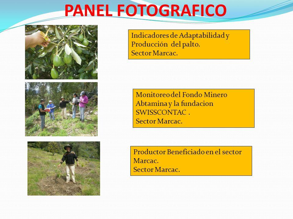 PANEL FOTOGRAFICO Indicadores de Adaptabilidad y Producción del palto. Sector Marcac. Monitoreo del Fondo Minero Abtamina y la fundacion SWISSCONTAC.