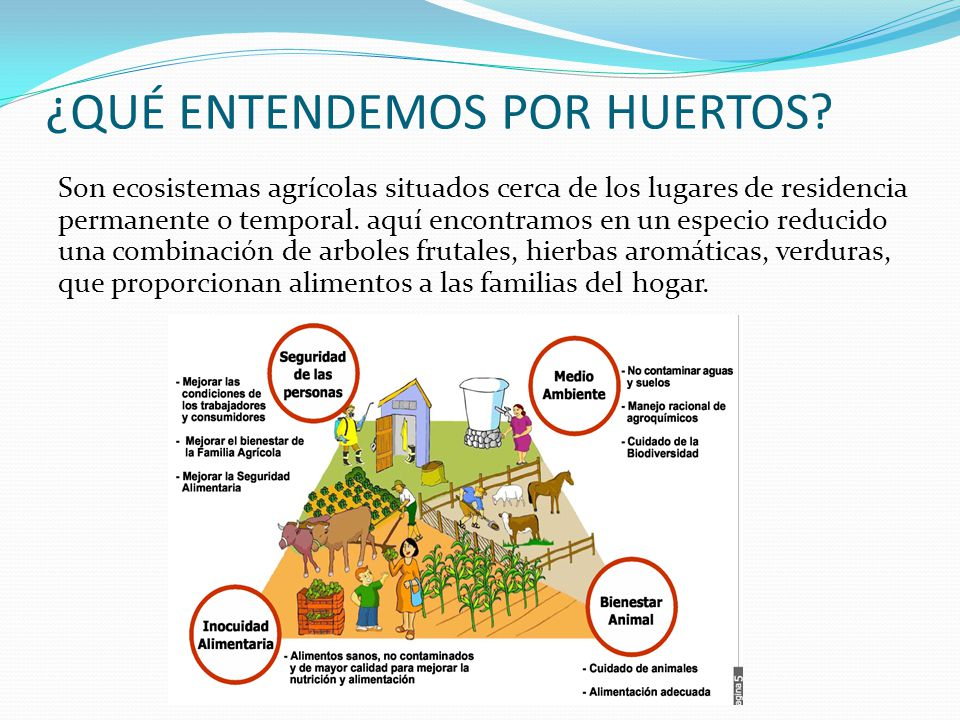 ¿QUÉ ENTENDEMOS POR HUERTOS? Son ecosistemas agrícolas situados cerca de los lugares de residencia permanente o temporal. aquí encontramos en un espec