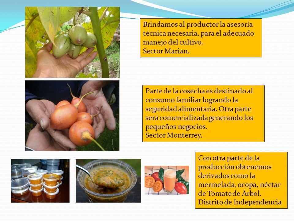 Brindamos al productor la asesoría técnica necesaria, para el adecuado manejo del cultivo. Sector Marian. Parte de la cosecha es destinado al consumo