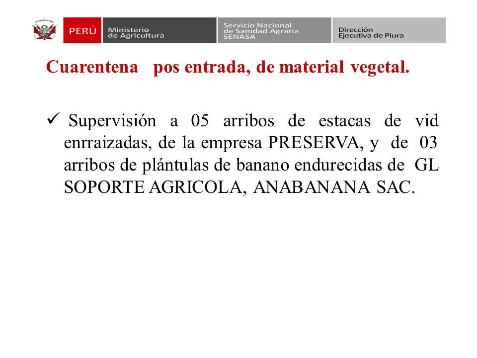 Instalación y evaluación de ensayos de eficacia de las empresas Framex en Querocotillo –Sullana, Farmagro S.A, en Marcavelica e Ignacio Escudero y Point andina S.A.