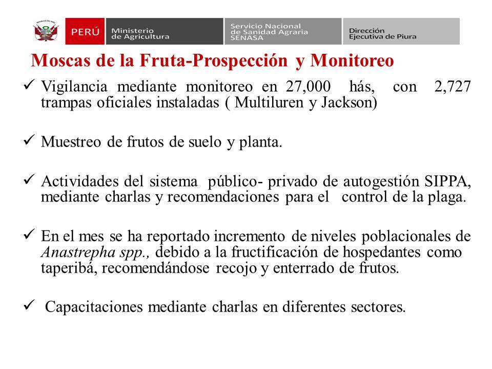 Moscas de la Fruta-Prospección y Monitoreo Vigilancia mediante monitoreo en 27,000 hás, con 2,727 trampas oficiales instaladas ( Multiluren y Jackson) Muestreo de frutos de suelo y planta.