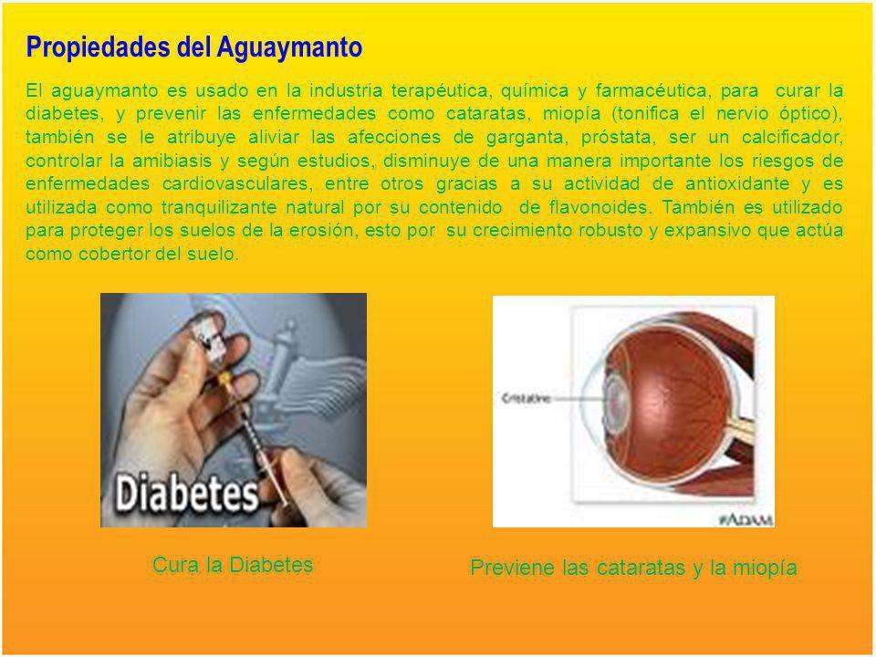 Formas de Consumo del Aguaymanto YOGURT MACERADO HELADO CONFITE SOUR SALSA COCTEL DESHIDRATADO MERMELADA NECTAR EN ALMIBAR