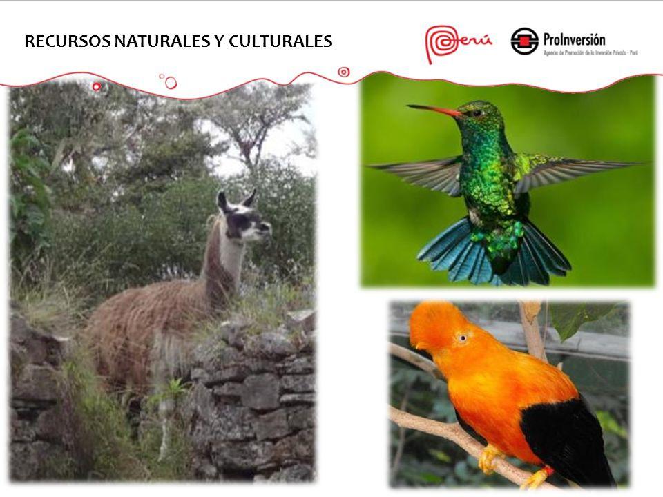 19 RECURSOS NATURALES Y CULTURALES