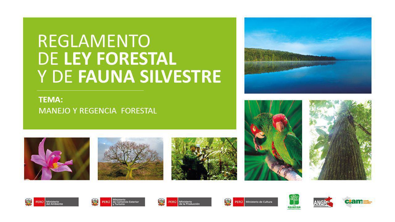 REGLAMENTO DE LEY FORESTAL Y DE FAUNA SILVESTRE TEMA: MANEJO Y REGENCIA FORESTAL
