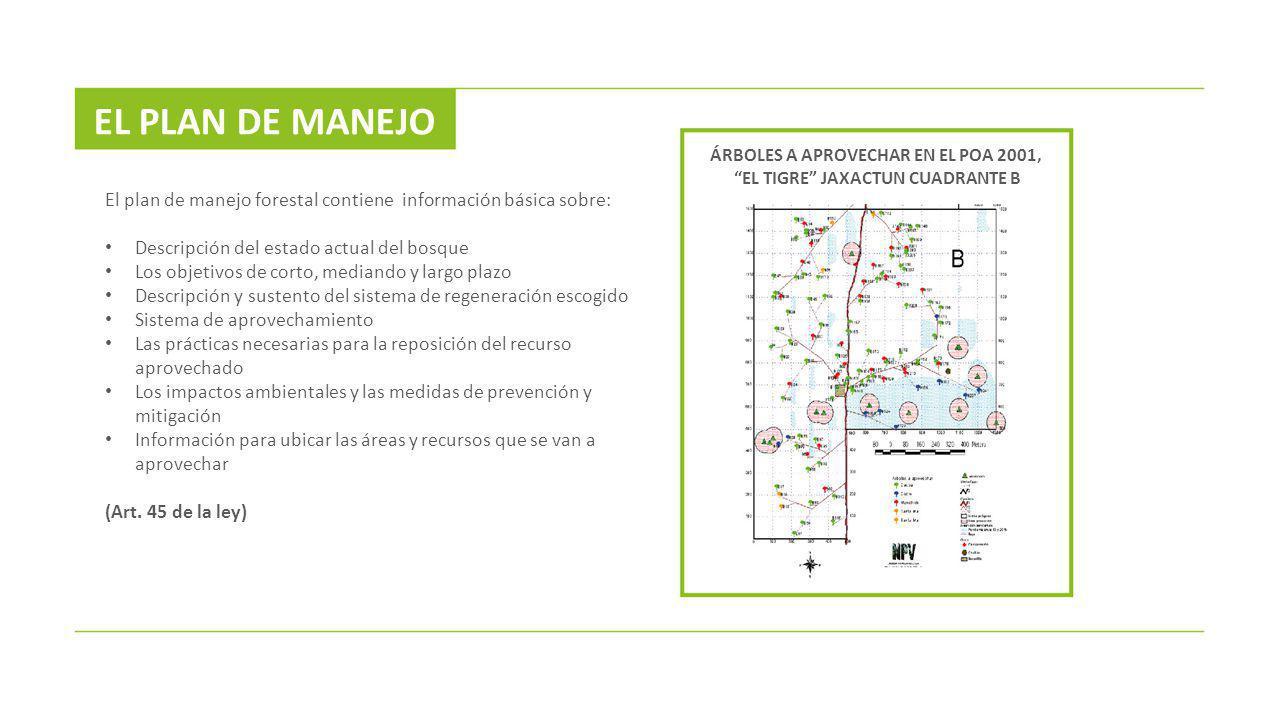 El plan de manejo forestal contiene información básica sobre: Descripción del estado actual del bosque Los objetivos de corto, mediando y largo plazo