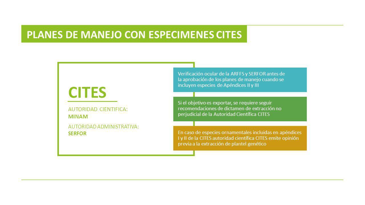 PLANES DE MANEJO CON ESPECIMENES CITES CITES AUTORIDAD CIENTIFICA: MINAM AUTORIDAD ADMINISTRATIVA: SERFOR Verificación ocular de la ARFFS y SERFOR ant