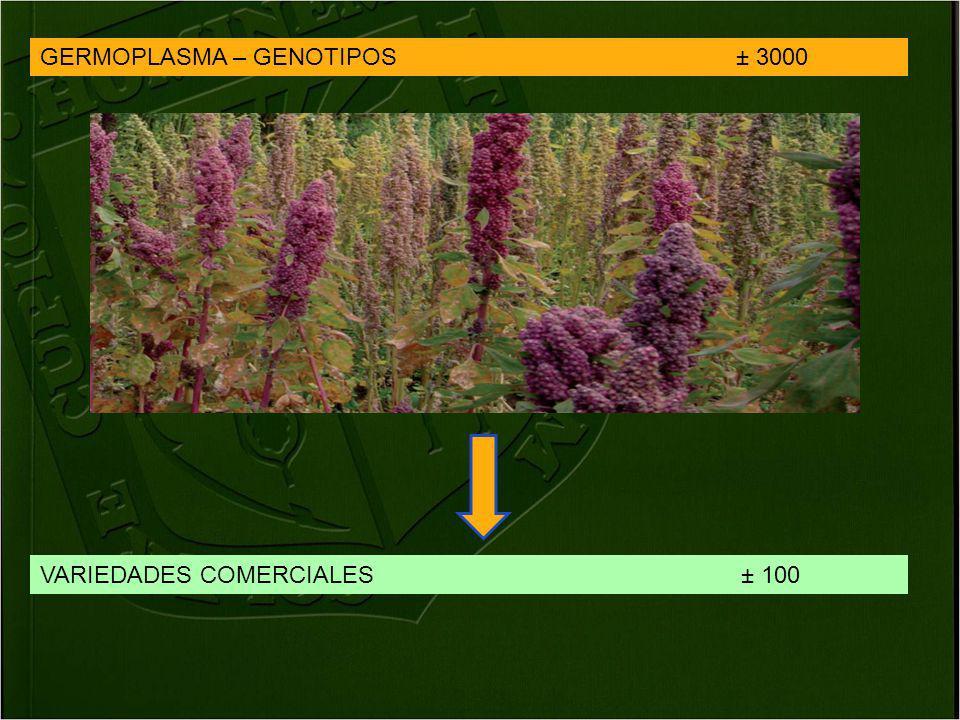 VARIEDADES COMERCIALES ± 100 GERMOPLASMA – GENOTIPOS ± 3000