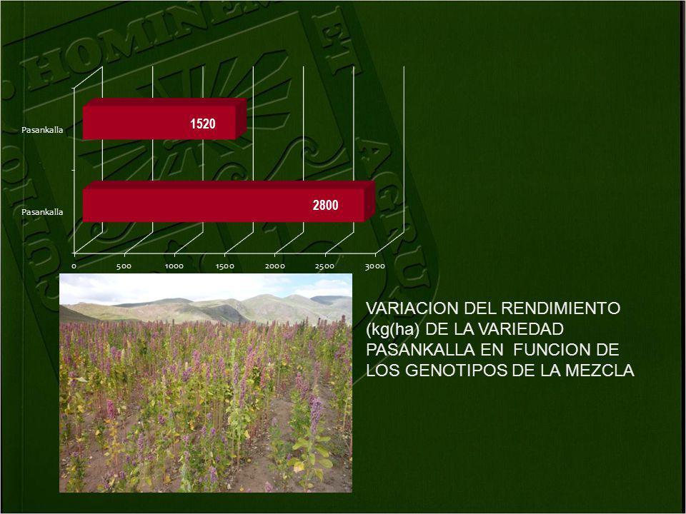 VARIACION DEL RENDIMIENTO (kg(ha) DE LA VARIEDAD PASANKALLA EN FUNCION DE LOS GENOTIPOS DE LA MEZCLA