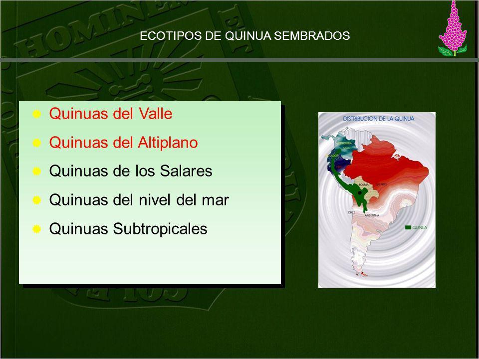 Quinuas del Valle Quinuas del Altiplano Quinuas de los Salares Quinuas del nivel del mar Quinuas Subtropicales Quinuas del Valle Quinuas del Altiplano