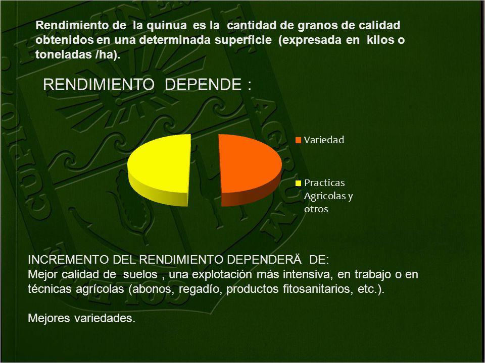 Rendimiento de la quinua es la cantidad de granos de calidad obtenidos en una determinada superficie (expresada en kilos o toneladas /ha). INCREMENTO