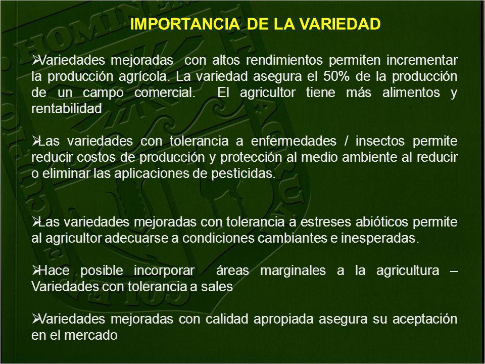 Variedades mejoradas con altos rendimientos permiten incrementar la producción agrícola. La variedad asegura el 50% de la producción de un campo comer