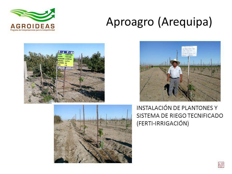 Aproagro (Arequipa) INSTALACIÓN DE PLANTONES Y SISTEMA DE RIEGO TECNIFICADO (FERTI-IRRIGACIÓN)