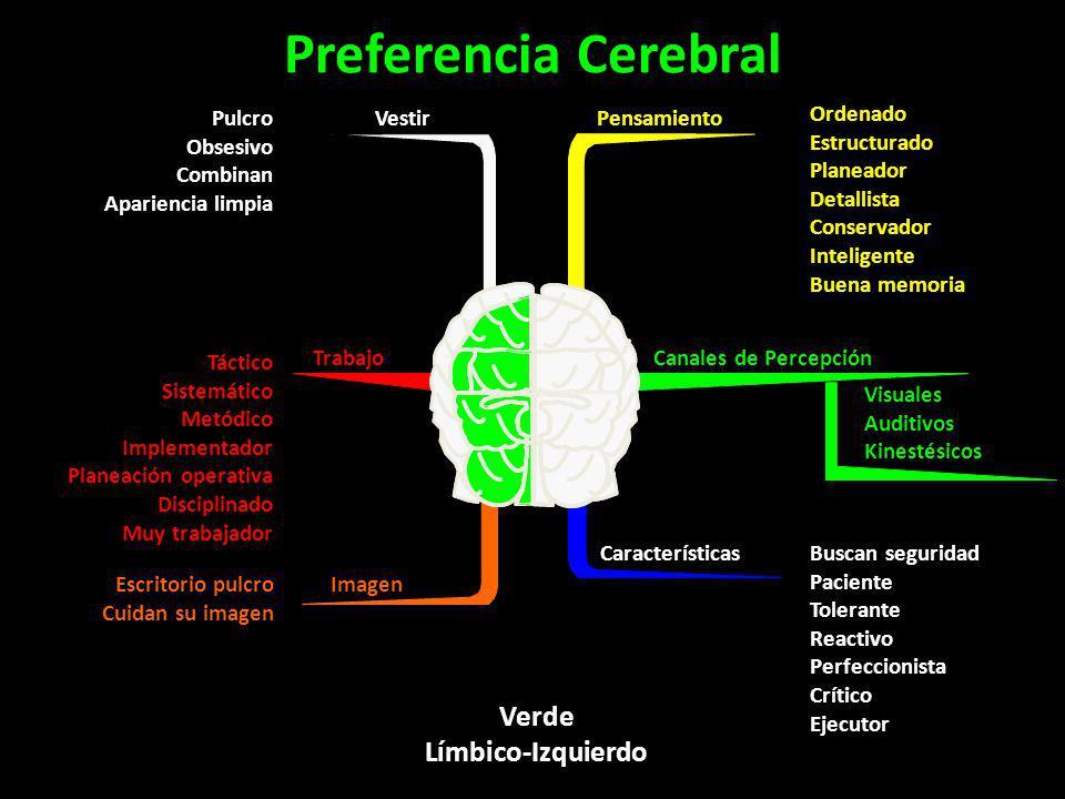 Verde Límbico-Izquierdo Preferencia Cerebral Pensamiento Ordenado Estructurado Planeador Detallista Conservador Inteligente Buena memoria Canales de P
