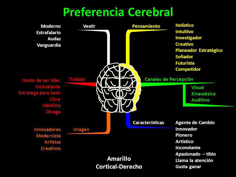 Amarillo Cortical-Derecho Preferencia Cerebral Pensamiento Holístico Intuitivo Investigador Creativo Planeador Estratégico Soñador Futurista Competido