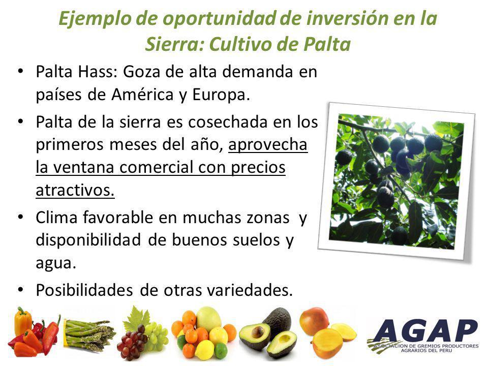Ejemplo de oportunidad de inversión en la Sierra: Cultivo de Palta Palta Hass: Goza de alta demanda en países de América y Europa. Palta de la sierra