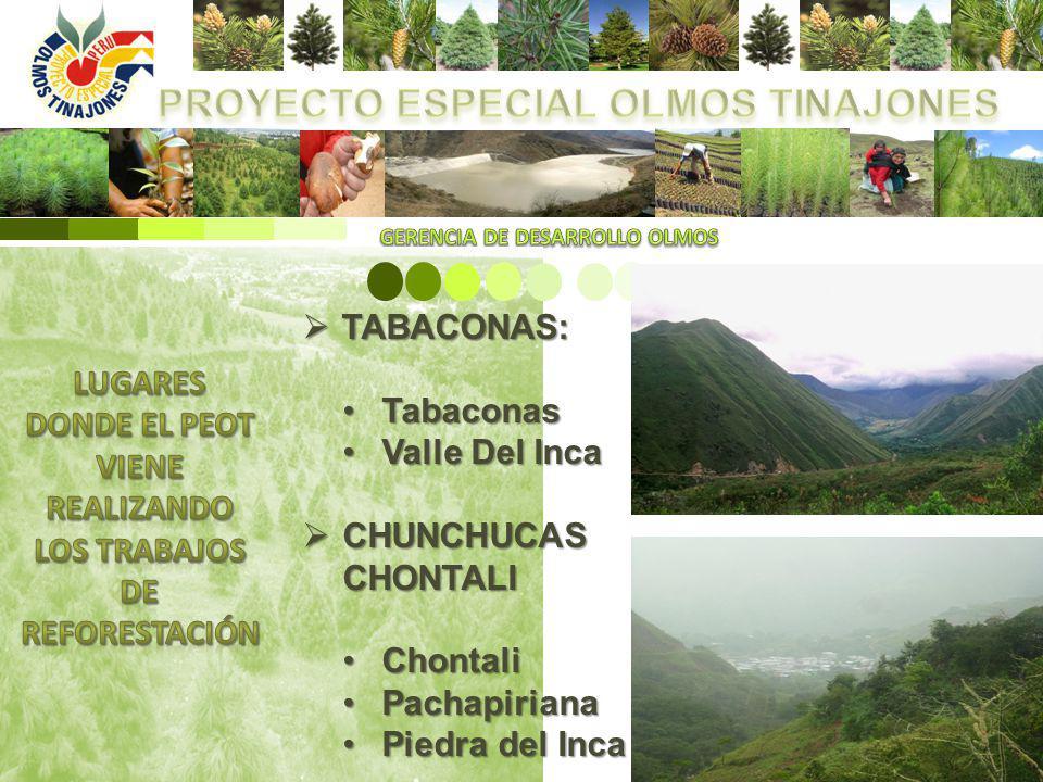 TABACONAS: TABACONAS: TabaconasTabaconas Valle Del IncaValle Del Inca CHUNCHUCAS CHUNCHUCASCHONTALI ChontaliChontali PachapirianaPachapiriana Piedra d