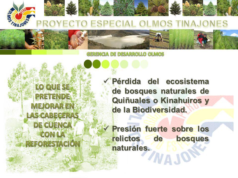 Pérdida del ecosistema de bosques naturales de Quiñuales o Kinahuiros y de la Biodiversidad. Pérdida del ecosistema de bosques naturales de Quiñuales