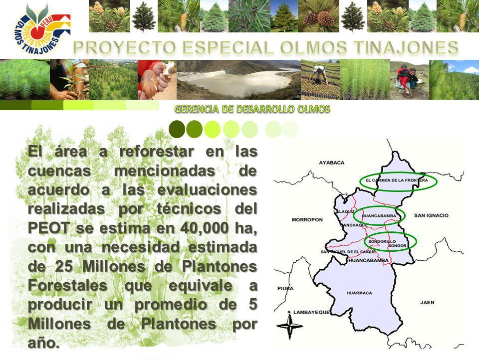 El planteamiento del Proyecto Especial Olmos Tinajones (PEOT) consiste en desarrollar un Plan de Reforestación participativo con todas las entidades involucradas en el tema forestal tales como las Municipalidades, Comunidades Campesinas, Mesa de concertación de lucha contra la pobreza, Pro-Santuario Tabaconas Namballe entre otras.