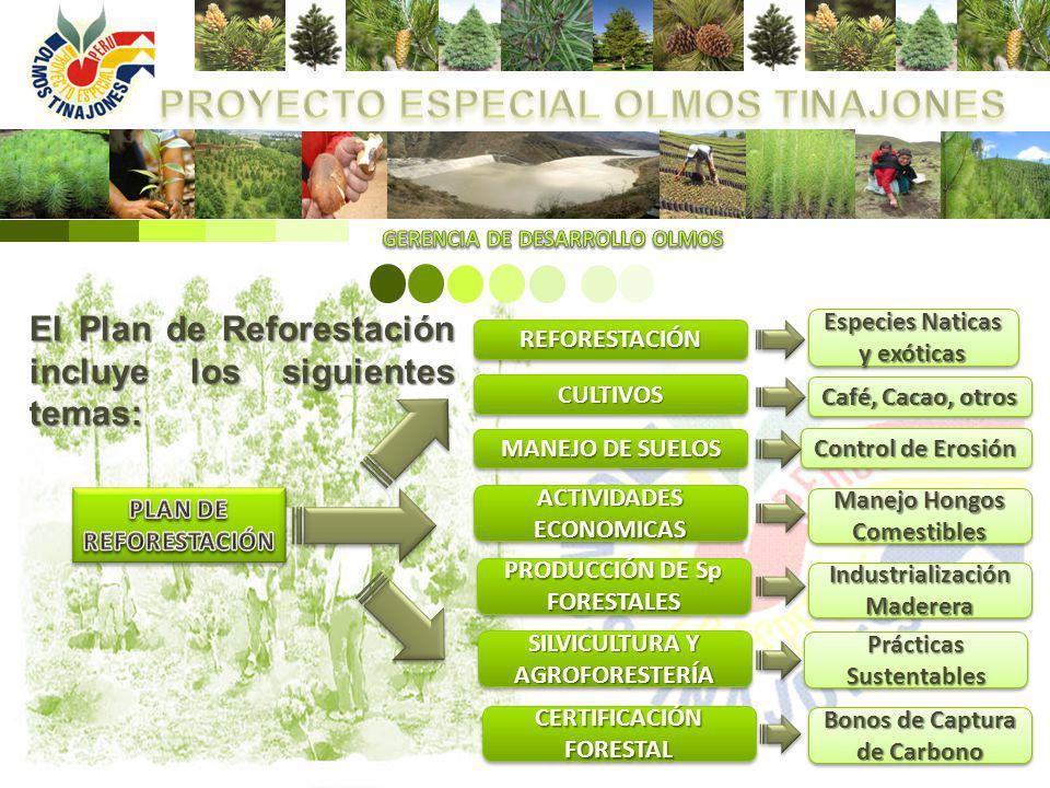 El Plan de Reforestación incluye los siguientes temas: REFORESTACIÓNREFORESTACIÓN CULTIVOSCULTIVOS MANEJO DE SUELOS ACTIVIDADES ECONOMICAS PRODUCCIÓN
