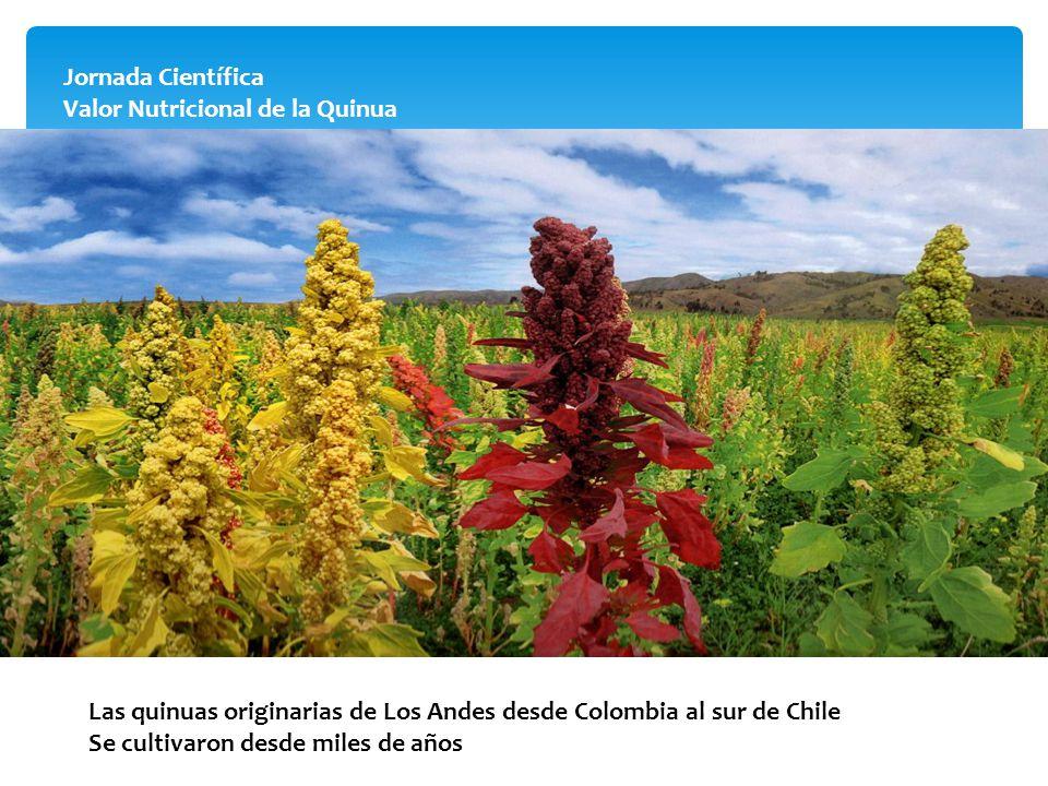 Jornada Científica Valor Nutricional de la Quinua Las quinuas originarias de Los Andes desde Colombia al sur de Chile Se cultivaron desde miles de año