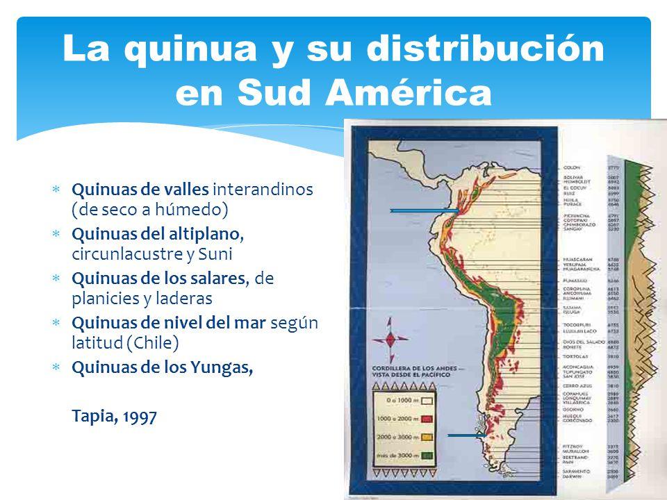La quinua y su distribución en Sud América Quinuas de valles interandinos (de seco a húmedo) Quinuas del altiplano, circunlacustre y Suni Quinuas de l