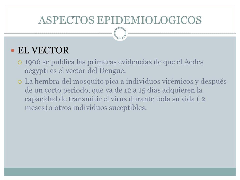 ASPECTOS EPIDEMIOLOGICOS EL VECTOR 1906 se publica las primeras evidencias de que el Aedes aegypti es el vector del Dengue. La hembra del mosquito pic