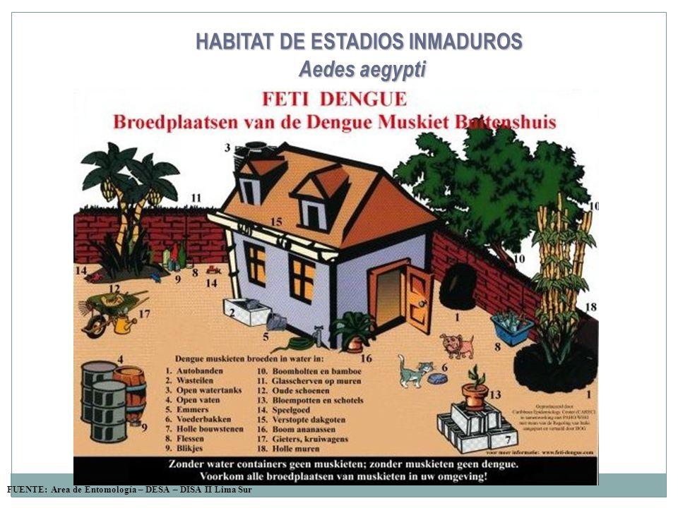 HABITAT DE ESTADIOS INMADUROS Aedes aegypti FUENTE: Area de Entomología – DESA – DISA II Lima Sur
