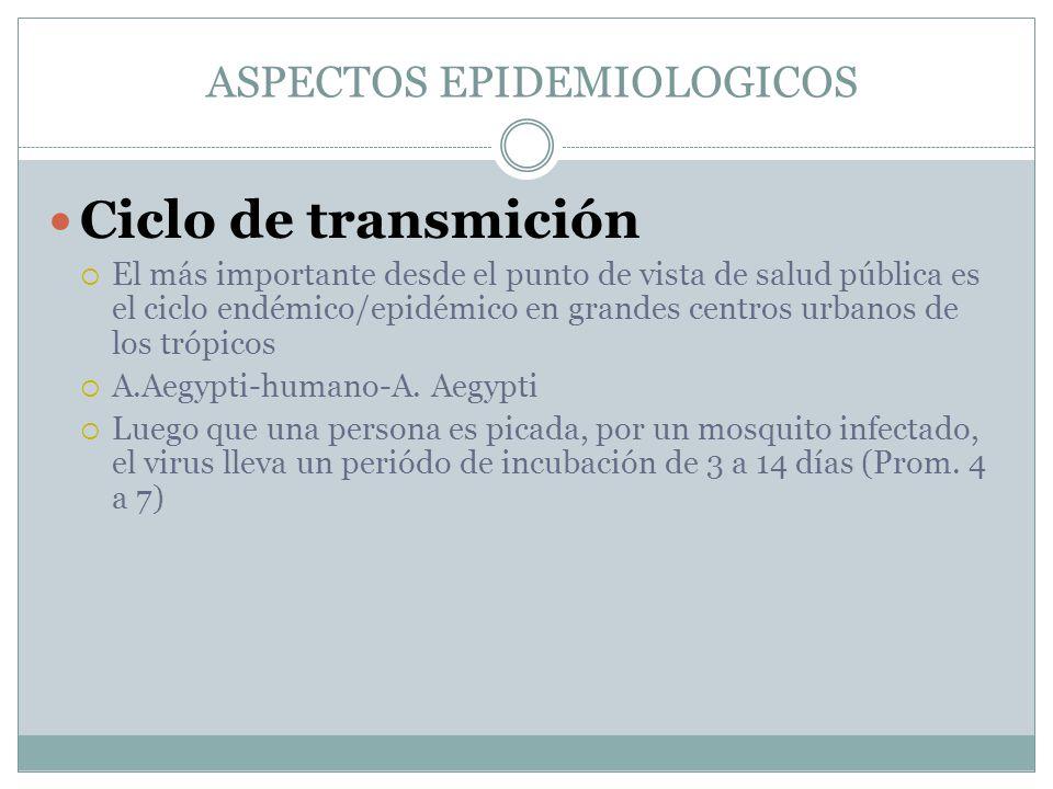 ASPECTOS EPIDEMIOLOGICOS Ciclo de transmición El más importante desde el punto de vista de salud pública es el ciclo endémico/epidémico en grandes cen