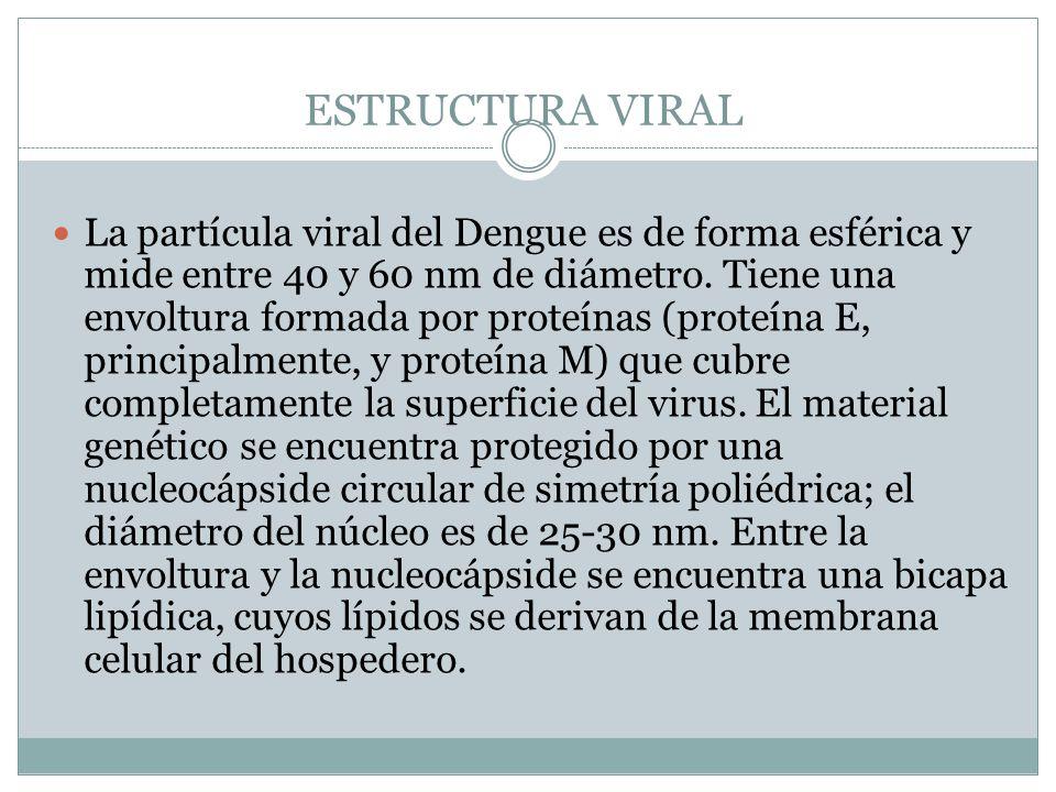 ESTRUCTURA VIRAL La partícula viral del Dengue es de forma esférica y mide entre 40 y 60 nm de diámetro. Tiene una envoltura formada por proteínas (pr