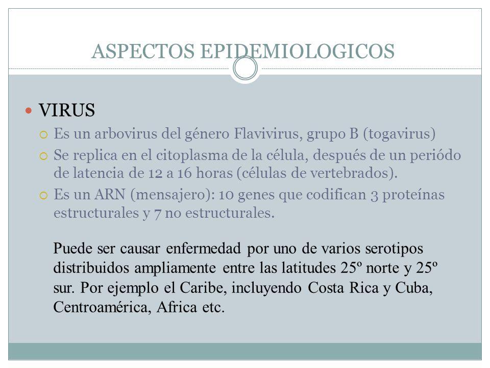 ASPECTOS EPIDEMIOLOGICOS VIRUS Es un arbovirus del género Flavivirus, grupo B (togavirus) Se replica en el citoplasma de la célula, después de un peri