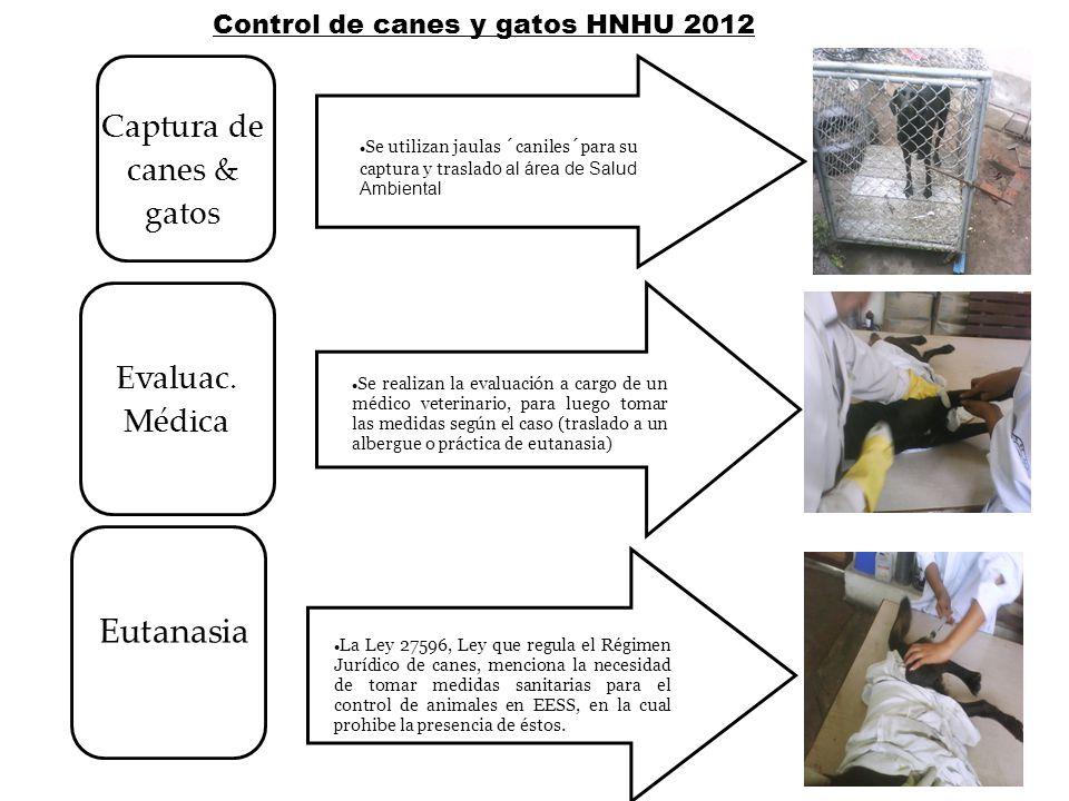 Se utilizan jaulas ´caniles´para su captura y traslad o al área de Salud Ambiental Se realizan la evaluación a cargo de un médico veterinario, para lu