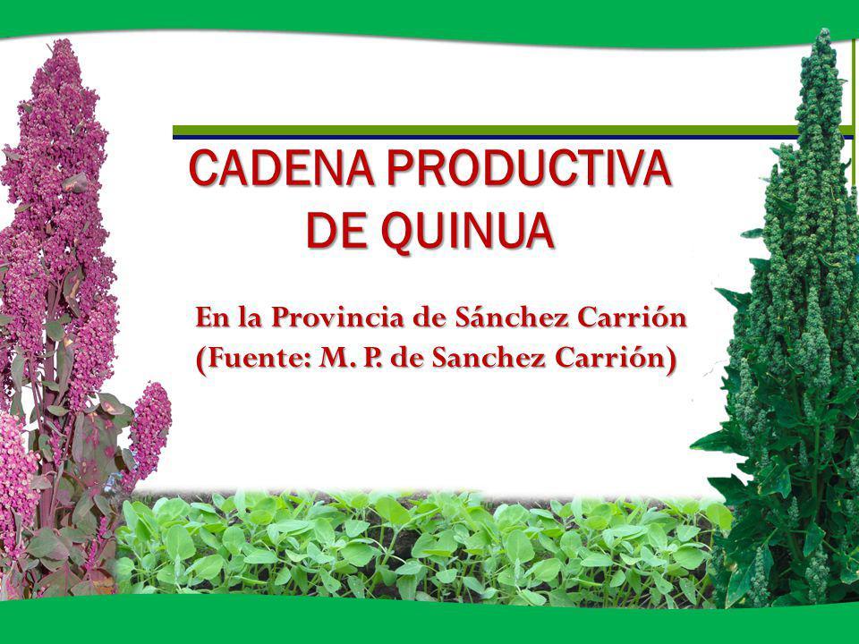 CADENA PRODUCTIVA DE QUINUA En la Provincia de Sánchez Carrión (Fuente: M. P. de Sanchez Carrión)