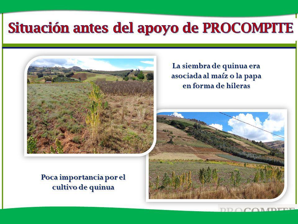 Poca importancia por el cultivo de quinua La siembra de quinua era asociada al maíz o la papa en forma de hileras