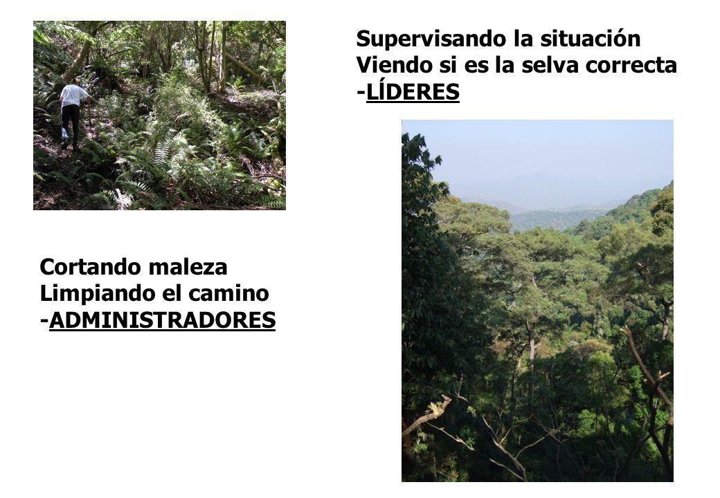 Cortando maleza Limpiando el camino -ADMINISTRADORES Supervisando la situación Viendo si es la selva correcta -LĺDERES