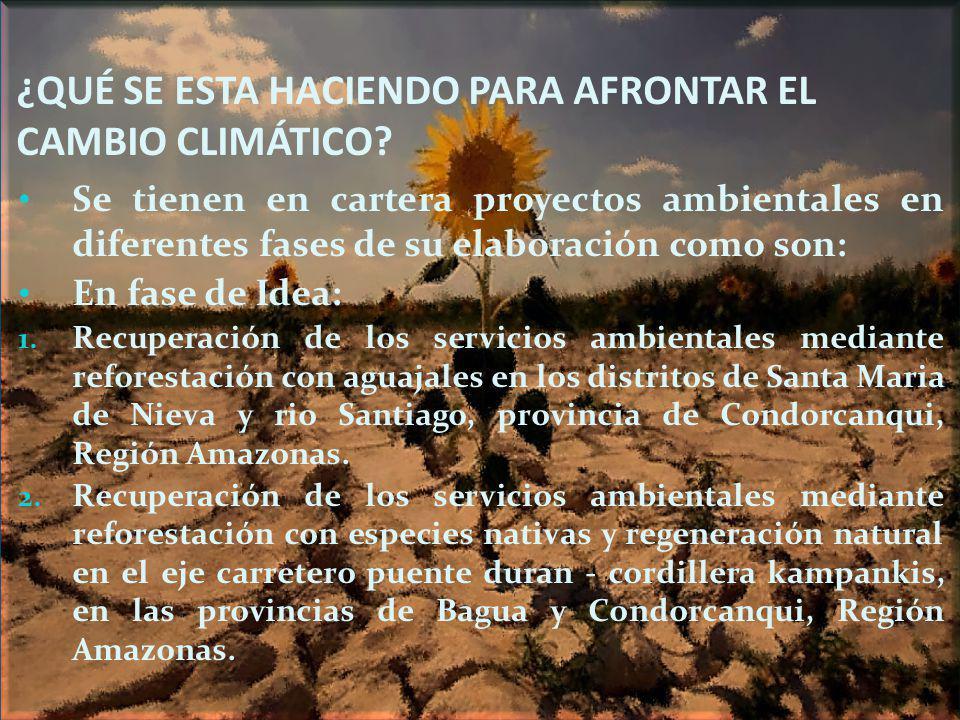 ¿QUÉ SE ESTA HACIENDO PARA AFRONTAR EL CAMBIO CLIMÁTICO? Se tienen en cartera proyectos ambientales en diferentes fases de su elaboración como son: En