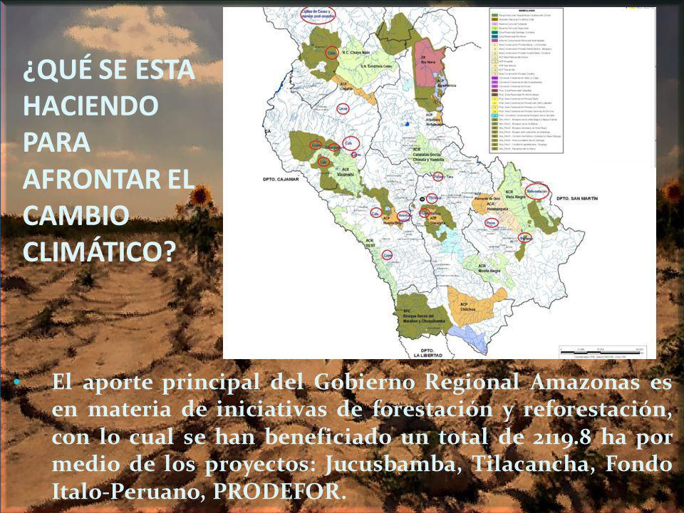 ¿QUÉ SE ESTA HACIENDO PARA AFRONTAR EL CAMBIO CLIMÁTICO? El aporte principal del Gobierno Regional Amazonas es en materia de iniciativas de forestació